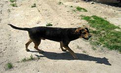 Pies sprzedany z działką i domem do remontu - Serwis informacyjny z Rybnika - naszrybnik.com