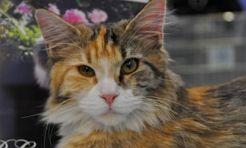 Głowa kotka utknęła w rurze! - Serwis informacyjny z Rybnika - naszrybnik.com