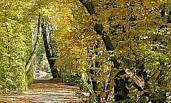 Jesień w lesie, polu i ogrodzie - Serwis informacyjny z Rybnika - naszrybnik.com