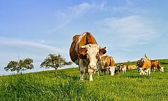 Spotkanie dla rolników - Serwis informacyjny z Rybnika - naszrybnik.com