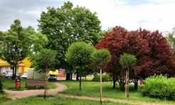 Przybywa nowych drzew w Rybniku - Serwis informacyjny z Rybnika - naszrybnik.com