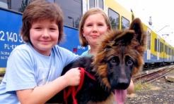 Sprawdź, jak to jest pojechać z psem na kolejową wycieczkę! - Serwis informacyjny z Rybnika - naszrybnik.com