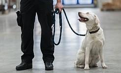 Są niezawodne i wyjątkowe. O psach w śląskiej służbie celno-skarbowej  - Serwis informacyjny z Rybnika - naszrybnik.com