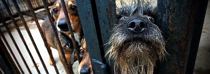Konkurs fotograficzny dla miłośników psów i nie tylko!  - Serwis informacyjny z Rybnika - naszrybnik.com