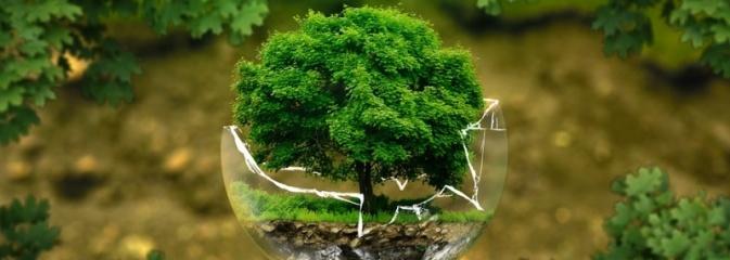 Dzieci piszą Listy dla Ziemi i proszą dorosłych, by byli po stronie natury  - Serwis informacyjny z Rybnika - naszrybnik.com