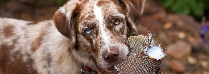 Przed wyjazdem na wakacje zapewnij opiekę swojemu zwierzęciu - Serwis informacyjny z Rybnika - naszrybnik.com