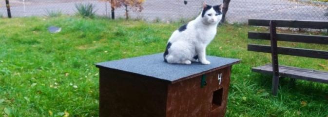 Dbamy o wszystkich, dbamy o koty - Serwis informacyjny z Rybnika - naszrybnik.com